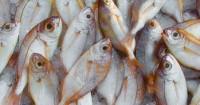 2. Pilih ikan rantai makanan terendah