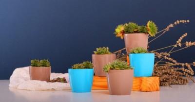 5 Jenis Tanaman Guna Mempercantik dan Menyegarkan Udara di Dalam Rumah