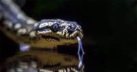 2. Bermimpi melihat ular menjadi sebuah tanda kehamilan