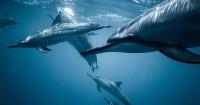 1. Bertemu lumba-lumba
