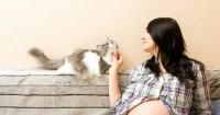 Persiapkan Kucing Peliharaan Menerima Bayi Mama Baru Lahir