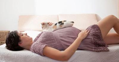 Apakah Mama Boleh Memelihara Kucing Saat Hamil Temukan Jawabannya