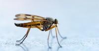 Di Bawah Rp 200 Ribu, 12 Rekomendasi Perangkap Pengusir Nyamuk