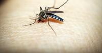 1. Bebaskan rumah dari nyamuk serangga