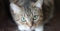 3. Memelihara kucing