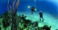5. Mengenalkan anak dunia bawah laut
