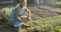 5 Tanaman Organik Bisa ditanam Pekarangan Rumah