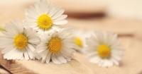 2. Wangi chamomile memiliki efek luar biasa