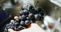 1. Fakta makan anggur bagi ibu hamil