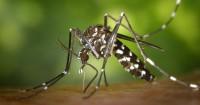 Apa itu Virus Zika
