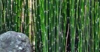 2. Bambu air