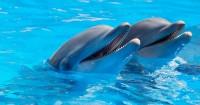 4. Beri edukasi mengenal hewan lebih dekat