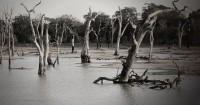 Yuk Cegah Banjir Membuat Lubang Biopori Rumah