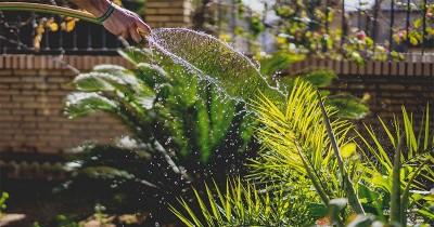 5 Hal Ini Perlu Diperhatikan Sebelum Membuat Taman di Depan Rumah