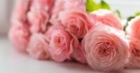 3. Rose
