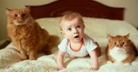 Masalah Keamanan Bayi