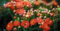 5. Bunga-bunga hias bermekaran
