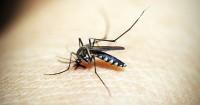 5. Waspada keberadaan nyamuk