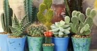 5. Pot cocok kaktus