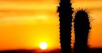4. Memilih baik jenis tanaman kaktus