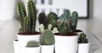 1. Letakan kaktus tempat tepat