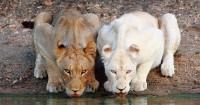 5. Tumbuhan hewan juga mengalami penyakit albino
