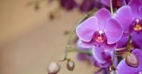 1. Bunga anggrek dapat dijadikan tanaman penyaring udara