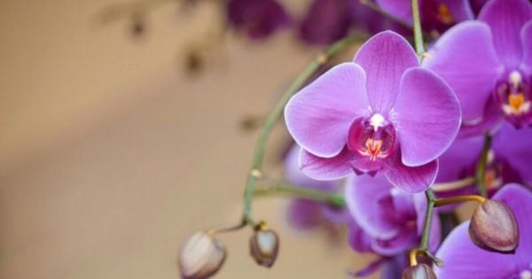 7 Tanaman Hias Bunga Ini Ampuh Serap Racun Popmama Com