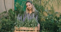 2. Mulai menanam tanaman pengusir ulat