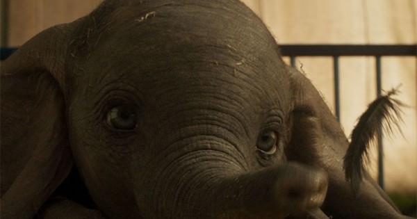 Lewat Film Dumbo Orangtua Bisa Kenalkan Nilai Kasih Sayang Pada Anak Popmama Com