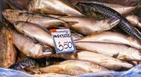 6. Pastikan kualitas ikan akan dibeli
