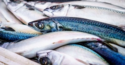 Perlu Dipahami, Ini Bedanya Bayi yang Alergi karena Ikan dan Seafood