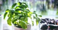 1. Cara menanam herbal dalam rumah