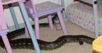 3. Serum anti bisa ular dapat mengobati reaksi akibat gigitan ular