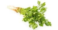 6. Gunakan rebusan daun ketumbar