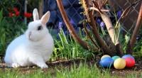 5. Kenapa Paskah identik Kelinci