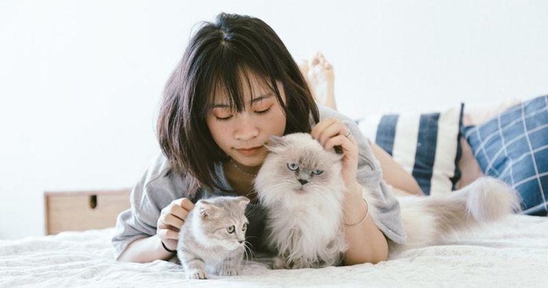 7 Cara Merawat Kucing Anggora Seru Banget Popmama Com