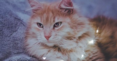 Banyak Dipelihara, Beri Tahu Anak Fakta Unik Seputar Kucing Anggora