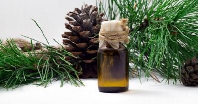8 Rekomendasi Merek Minyak Kayu Putih Bagus Beserta Harganya