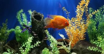 Ayo, Lengkapi Aquarium Rumah 5 Jenis Tanaman Aquascape Ini