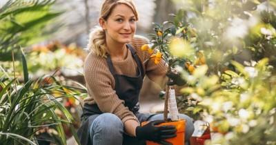Sebagai Pemula, Perhatikan 5 Hal Penting Ini Mulai Berkebun