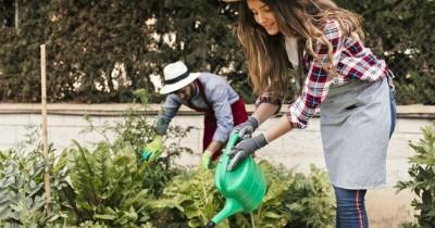 Berkebun di Rumah, Ini Beberapa Sayuran yang Cepat Panen