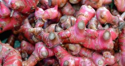 5 Manfaat Jahe Merah Meningkatkan Kesuburan