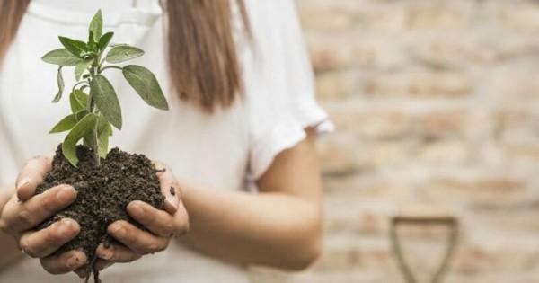 Berkebun Di Rumah Mudah Menanam Tanaman Menggunakan Polybag Popmama Com