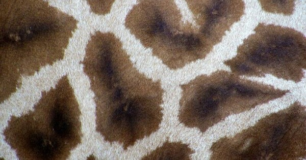 Jenis Karpet Lantai Rumah Berdasarkan Bahannya | Popmama.com
