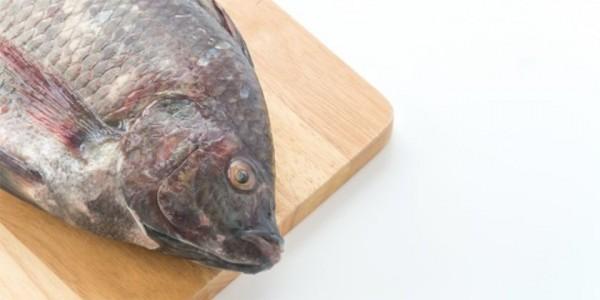 Download 63 Gambar Ikan Nila Banyak HD Terpopuler