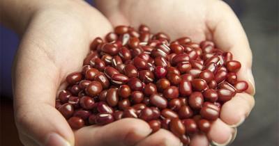 Disarankan Ini 5 Manfaat Mengonsumsi Kacang Merah Ibu Menyusui