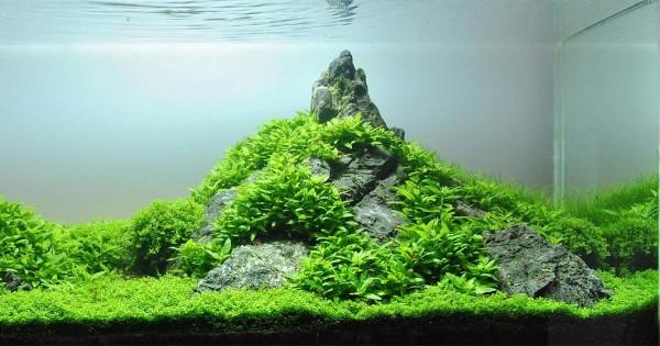 5 Gaya Aquascape Untuk Pecinta Tanaman Air Popmama Com