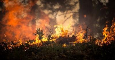 Bisa Mematikan, ini Bahaya Asap Kebakaran Hutan bagi Anak 1 Tahun
