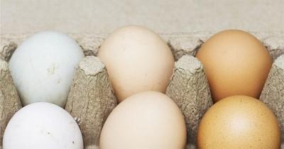 Manfaat Kuning Telur Bebek Kesuburan Program Hamil